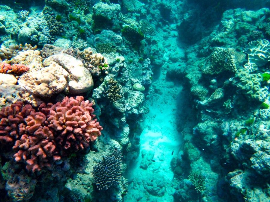 Reef-30