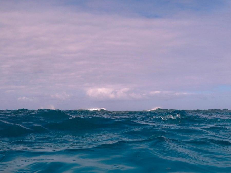 Reef-52