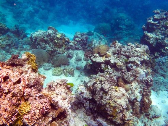 Reef-14.jpg